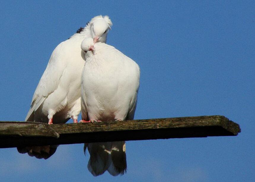 Фото голубя с воробьями прикол нас обоих
